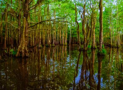 Swamp/Bayou 30