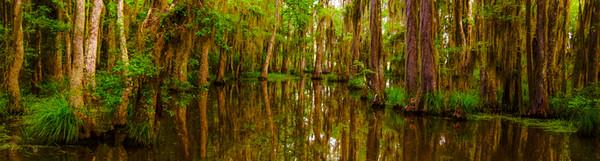 Swamp/Bayou 18