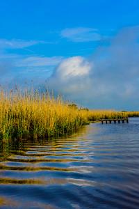 Swamp/Bayou 63