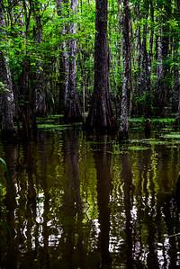 Swamp/Bayou 48