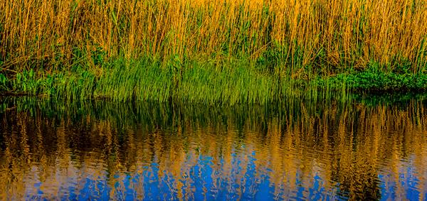 Swamp/Bayou 62