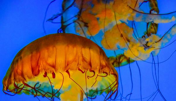 National Aquarium 18