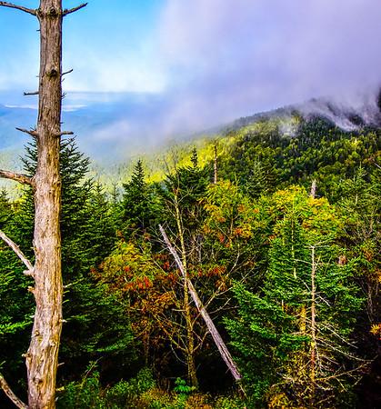 Smoky Mountains 164