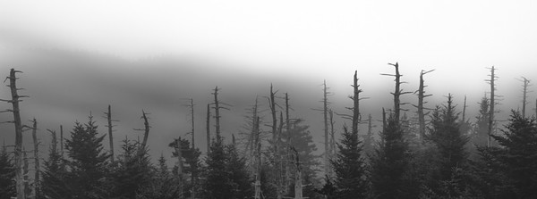 Smoky Mountains 79