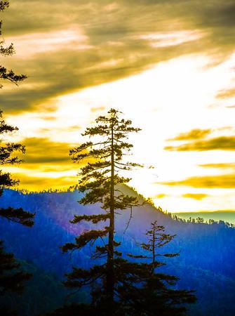 Smoky Mountains 22