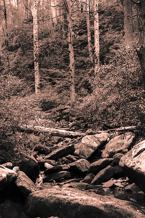 Smoky Mountains 12