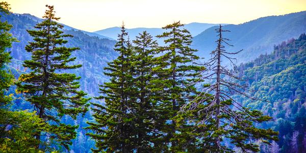 Smoky Mountains 24