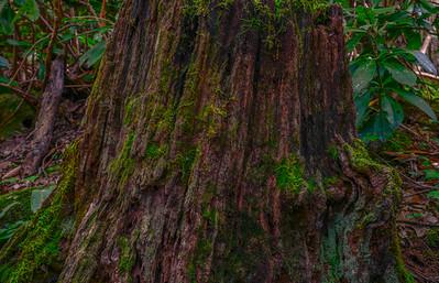 Smoky Mountains 8