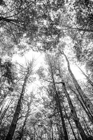 Smoky Mountains 13