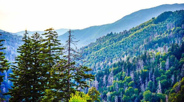Smoky Mountains 25