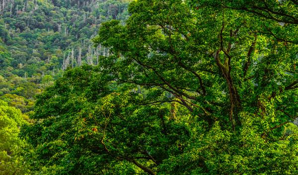 Smoky Mountains 20