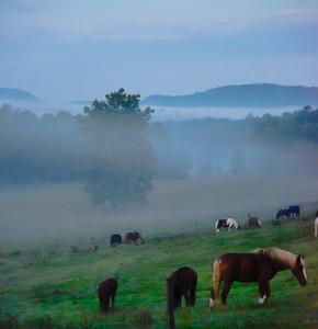 Smoky Mountains 295