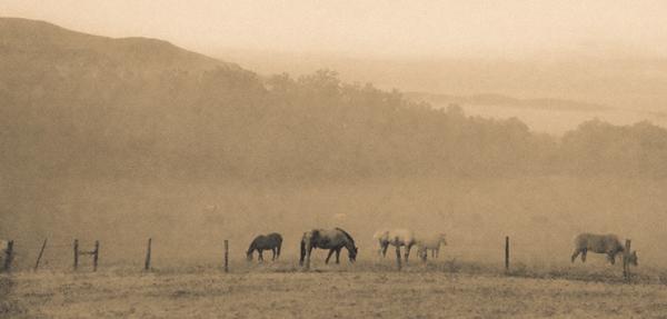 Smoky Mountains 288