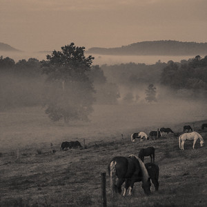 Smoky Mountains 294