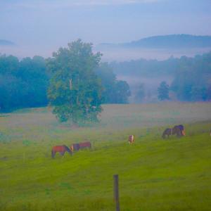 Smoky Mountains 298