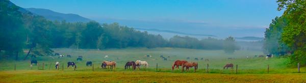 Smoky Mountains 296