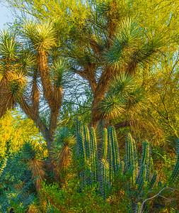 Desert Art  6