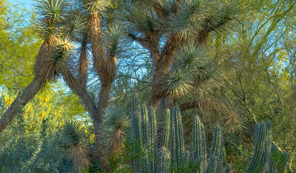 Desert Art  14
