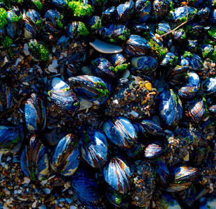FOUR SEASONS MUSSELS