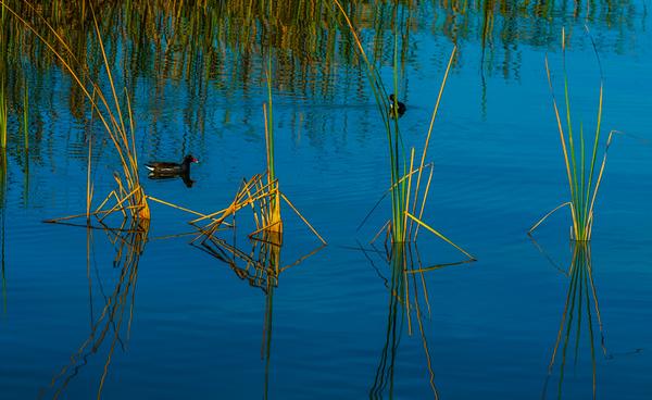 LAKE VIEW  11
