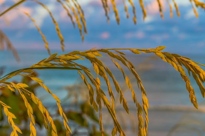 SEA SIDE 14