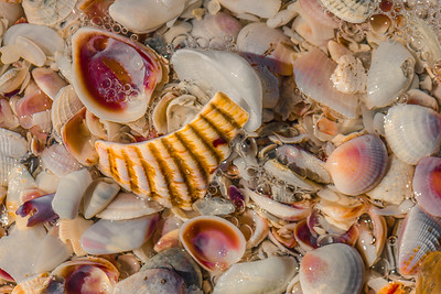 SEE SHELLS   3