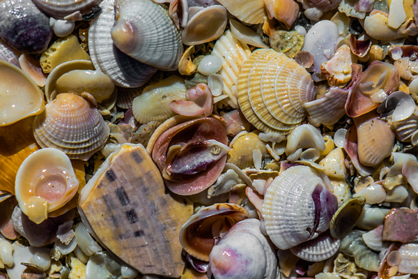 SEE SHELLS   6