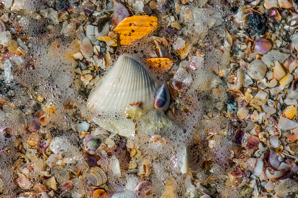 SEE SHELLS   8