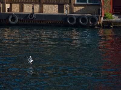 25. November 2017 - at Bosphorus, TR - E-M5MarkII - Zoom 40-150mm f/4-5.6 - 82mm - f:4.8 - 1/160sec - ISO:200 - Manual