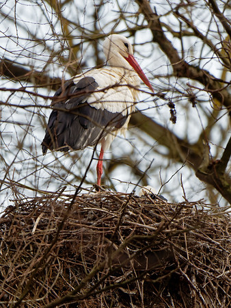 25. March 2018 - at Schierstein, DE - E-M5MarkII - Zoom 100-400mm f/4-6.3 - 400mm - f:6.3 - 1/800sec - ISO:640 - Manual