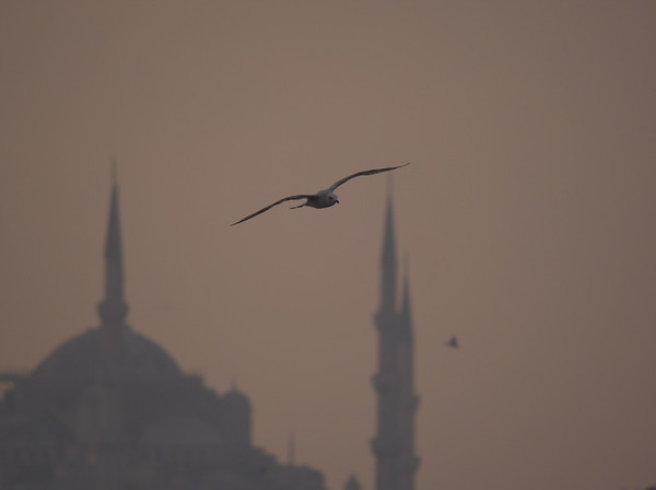 22. October 2018 - at Kadikoy, TR - E-M1MarkII - LEICA DG 100-400/F4.0-6.3 - 400mm - f:6.3 - 1/2000sec - ISO:800 - Manual