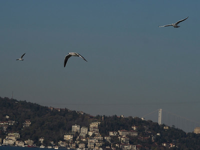 25. November 2017 - at Bosphorus, TR - E-M5MarkII - Zoom 40-150mm f/4-5.6 - 145mm - f:5.6 - 1/1000sec - ISO:200 - Manual
