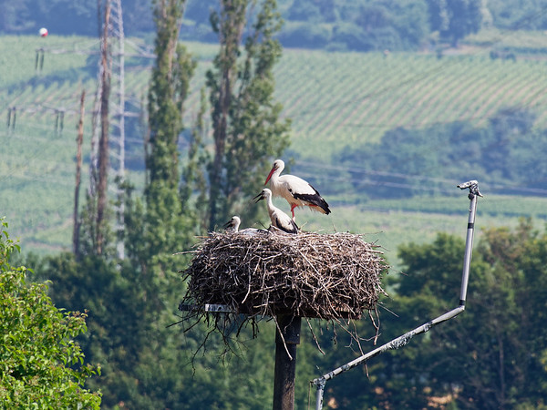 10. June 2018 - at Schierstein, DE - E-M1MarkII - Zoom 100-400mm f/4-6.3 - 400mm - f:8 - 1/500sec - ISO:400 - Manual