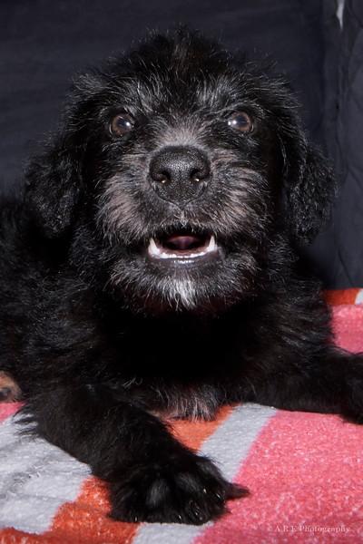 Dracula's puppy