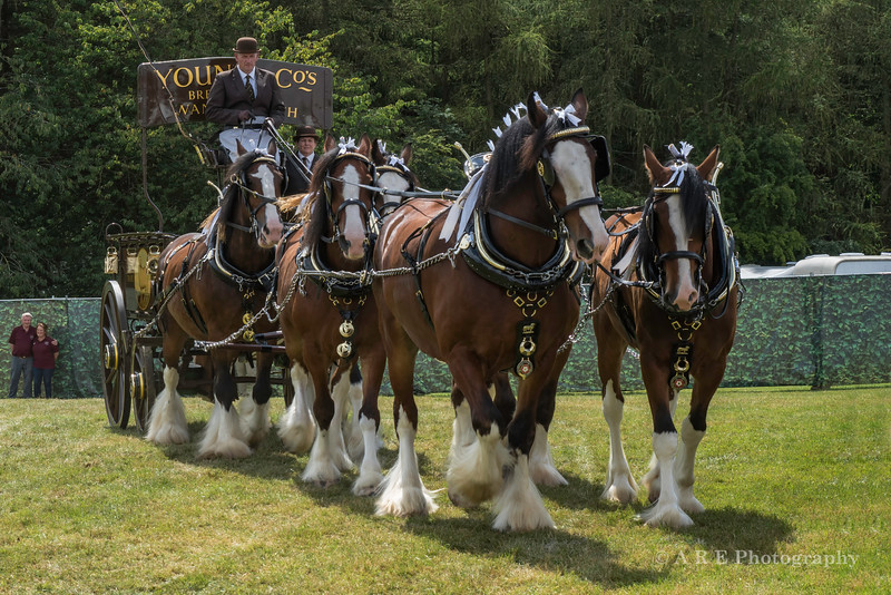 Shire horses and carriage