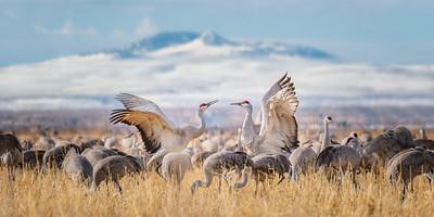 Crane Conversation