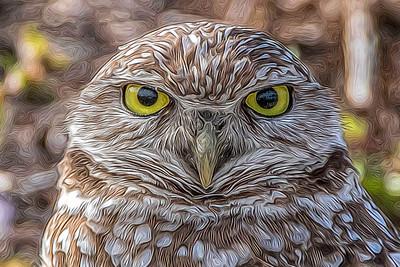 Burrowing Owl, processed with Topaz Glow