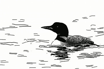 Common Loon, B&W