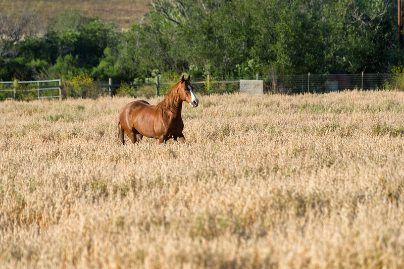 Wild horses, Return to Freedom Sanctuary