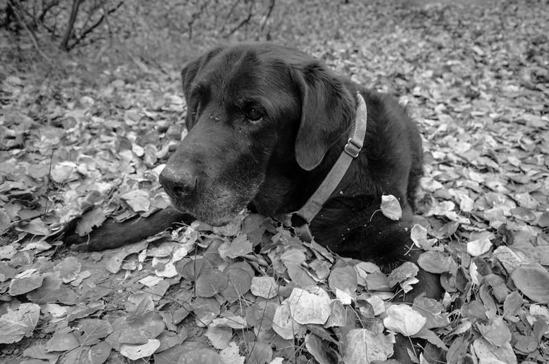 Teddy the dog near Bishop Creek.