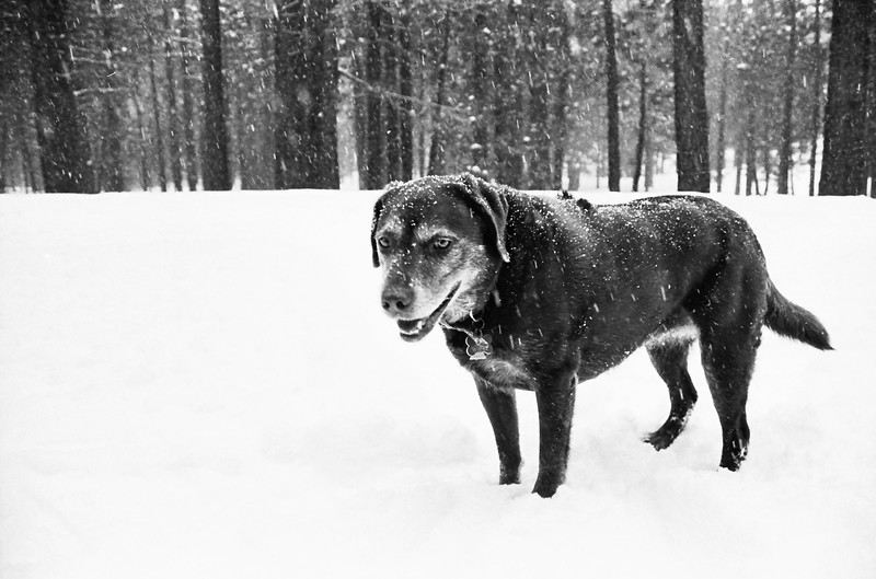 Molly at Shady Rest in Mammoth during a big storm.