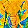 Yellow bull elephant (Etosha, Namibia)
