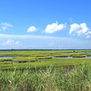 Vast Marshes