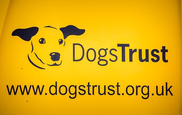 Dog's Trust Roz (578 of 1247)