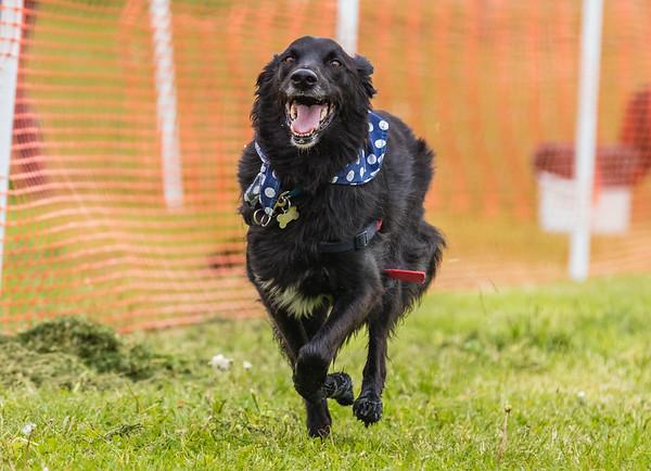Dog's Trust Roz (36 of 1247)