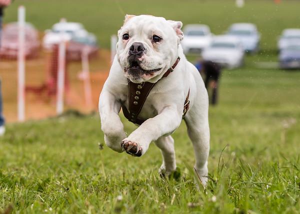 Doggy Dash & Agility