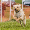 Dog's Trust Roz (79 of 1247)
