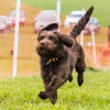 Dog's Trust Roz (68 of 1247)