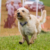 Dog's Trust Roz (81 of 1247)