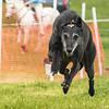 Dog's Trust Roz (788 of 1247)